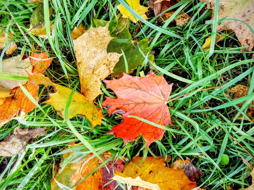 Mit diesen Tipps hat der Herbstblues keine Chance